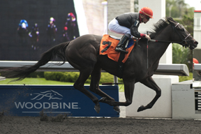 Thumbnail for Youcan'tcatchme runs away with Etobicoke Stakes