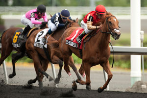 Thumbnail for Checkered Past Seeks Graded Status in Ontario Matron