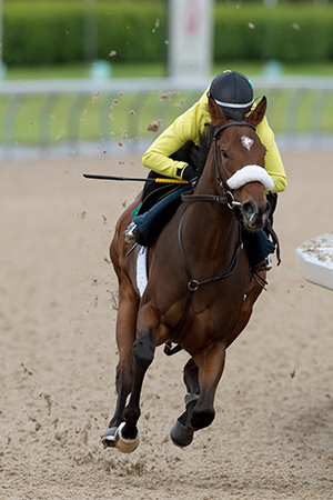 Thumbnail for Holy Helena Leads Competitive Woodbine Oaks