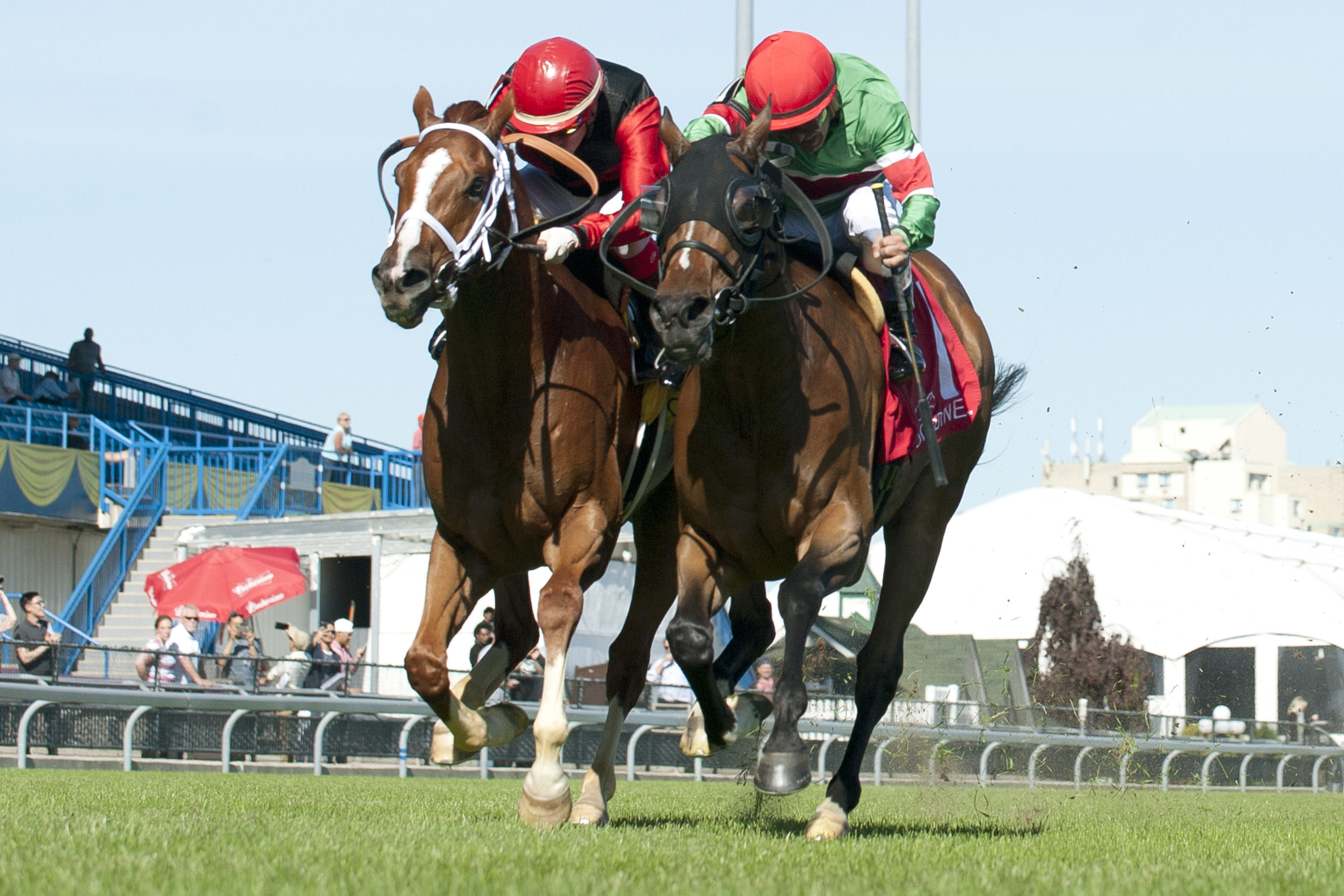 Thumbnail for 'Texas' Hold 'em: Tower of Texas Wins Connaught Cup Thriller