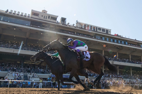 Thumbnail for Ami's Mesa a gutsy second in Breeders' Cup thriller