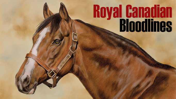 Thumbnail for Royal Canadian Bloodlines