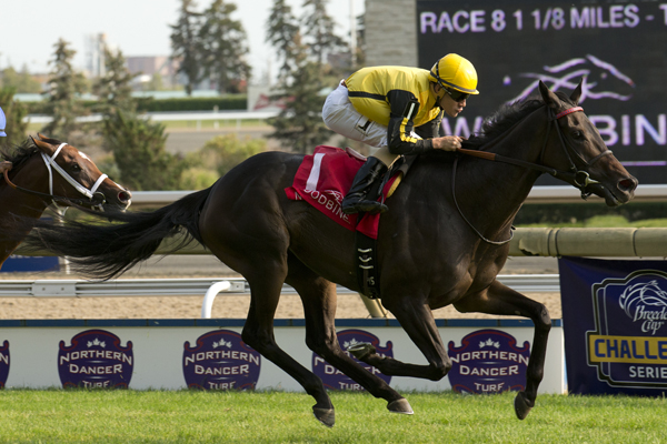 Thumbnail for Woodbine Entertainment and Japan Racing Association partner on race sponsorship