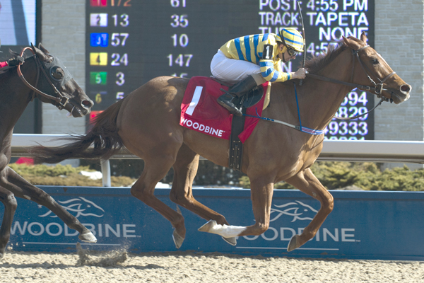 Thumbnail for Pink Lloyd sets track record in Jacques Cartier Stakes