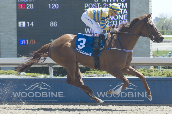 Thumbnail for Pink Lloyd Aims for 11th Win in Achievement Stakes