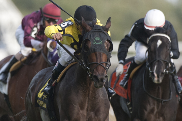 Thumbnail for Four-year-old campaign debut for Mr Havercamp in Steady Growth Stakes