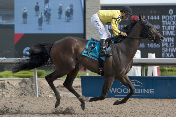 Thumbnail for Mr Havercamp takes the Steady Growth Stakes at Woodbine