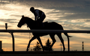 Real Dude during morning training at Woodbine. Michael Burns Photo