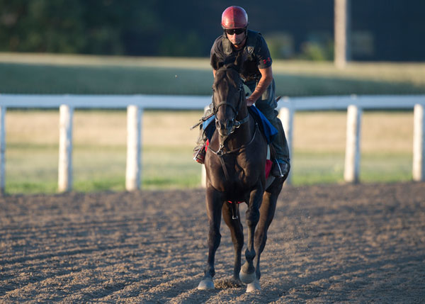 Thumbnail for Stronach Stables' Sights Are Set on the Queen's Plate