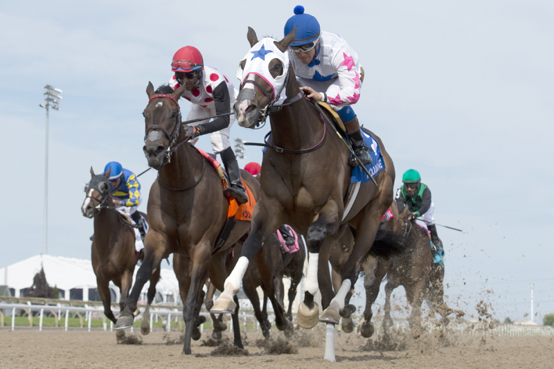 Thumbnail for Well-rested Code Warrior headlines Royal North at Woodbine