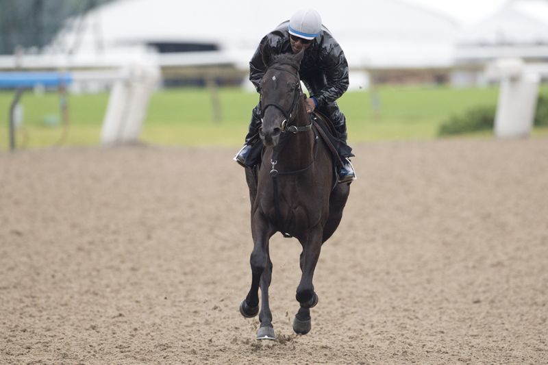 Thumbnail for Two $100,000 stakes spotlight young talent on Saturday at Woodbine