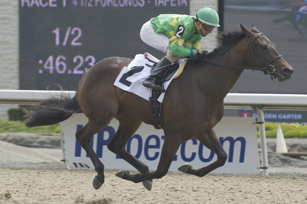 Thumbnail for My Gal Betty looks to best My Dear field of fillies at Woodbine