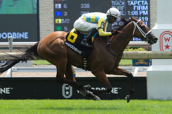 Thumbnail for Ride a Comet to Kilroe Mile, 'Honor Waits for Woodbine