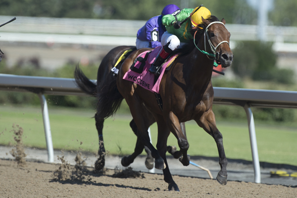 Thumbnail for Stubborn Stifling takes My Dear Stakes at Woodbine