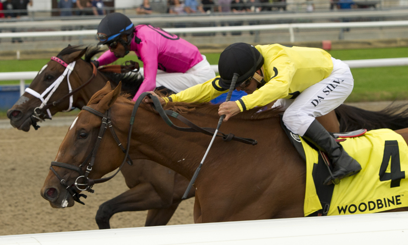 Thumbnail for Dixie Moon looks for second Canadian classic win in Wonder Where