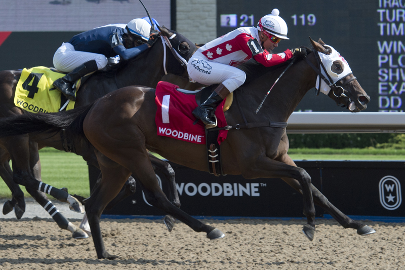 Thumbnail for Line of Vision highlights field of Ontario-sired fillies in Passing Mood Stakes