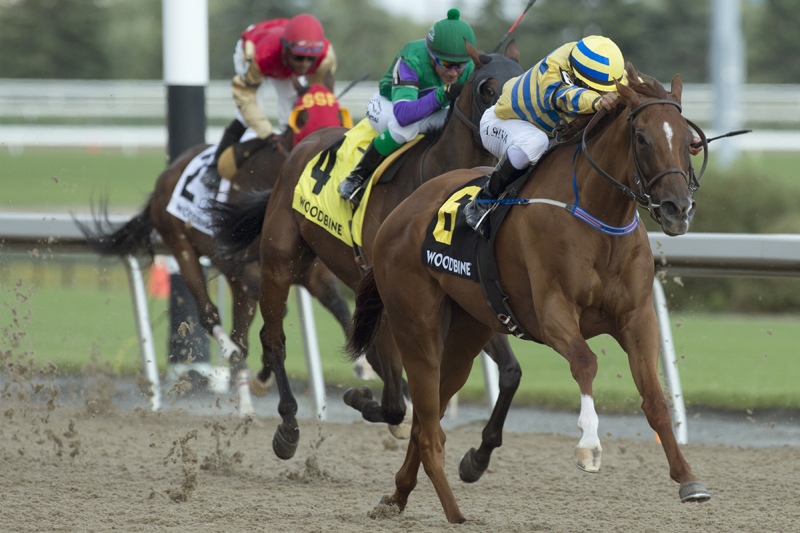 Thumbnail for Canadian Premier Yearling Sale graduates featured mid-week at Woodbine