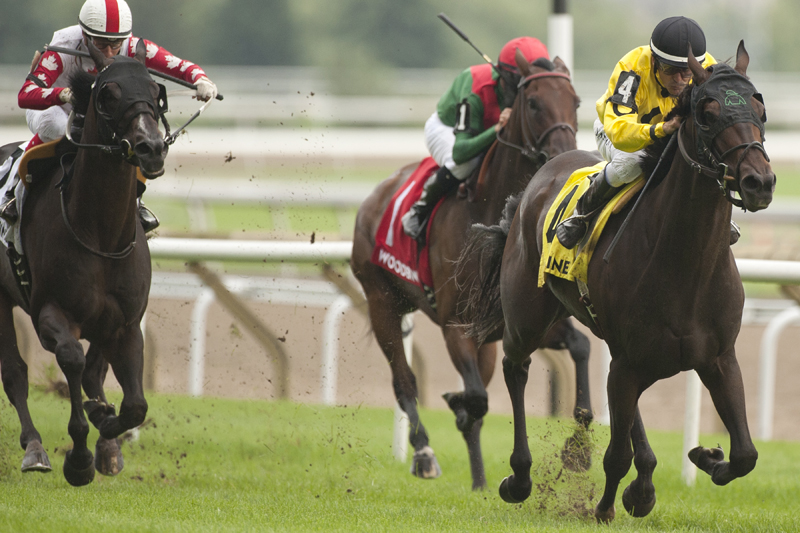 Thumbnail for An early look at the field for the rich Ricoh Woodbine Mile