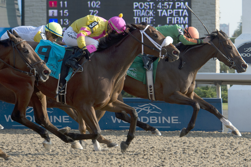Thumbnail for Sparkles' Girl looks to repeat in Classy 'n Smart Stakes at Woodbine