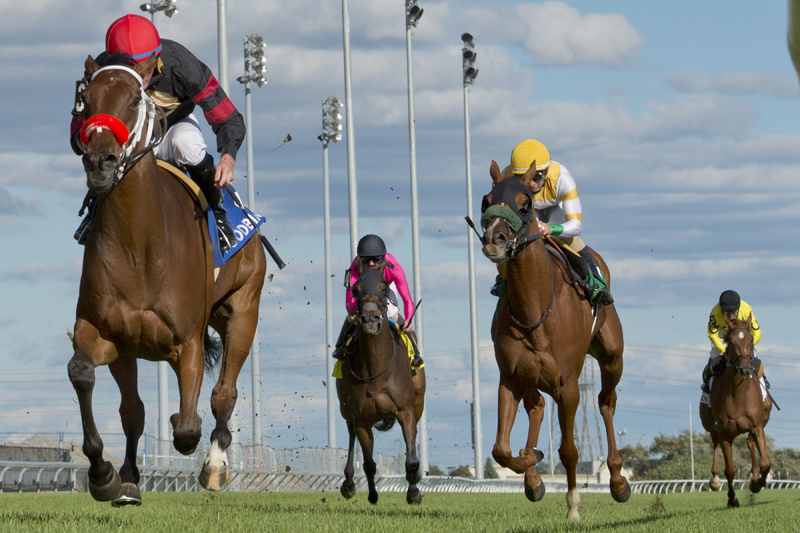 Thumbnail for Gutsy Ontario Damsel Stakes effort earns Zestina a win at Woodbine