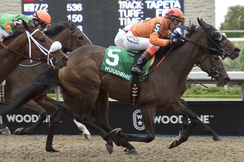 Thumbnail for Bear Paw prevails in Classy 'n Smart Stakes at Woodbine