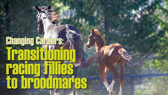 Thumbnail for Transitioning Racing Fillies to Broodmares