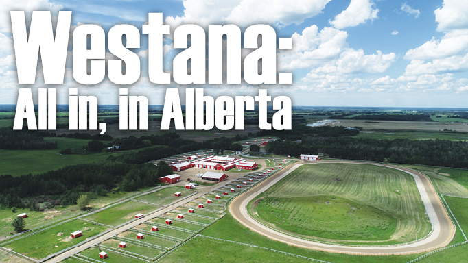 Thumbnail for Westana: All in, in Alberta