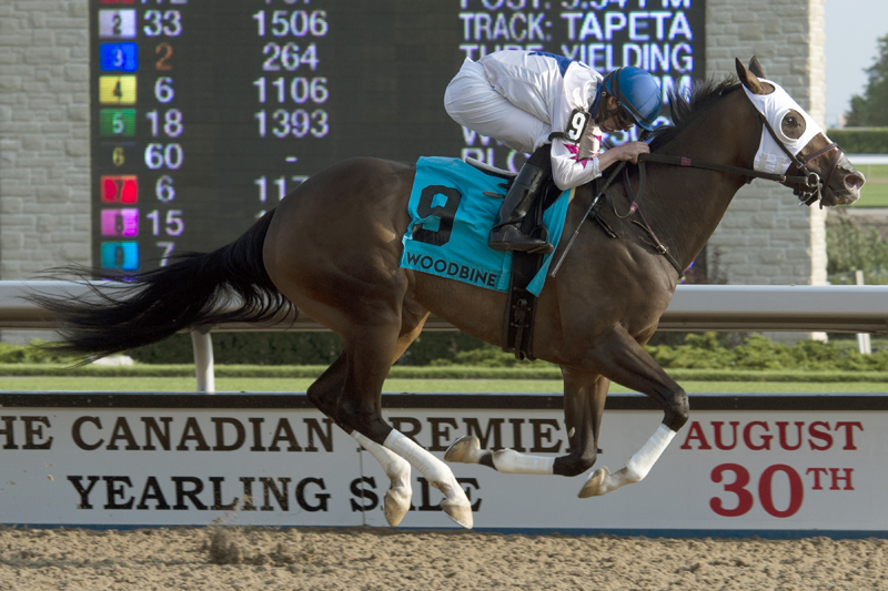Thumbnail for Code Warrior set to strut her stuff in the Ontario Fashion Stakes at Woodbine