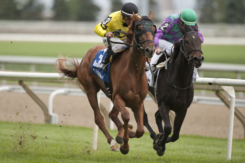 Thumbnail for Dixie Moon returns to winning form in Carotene Stakes