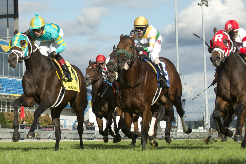 Thumbnail for Hembree scores by a neck in Nearctic Stakes at Woodbine