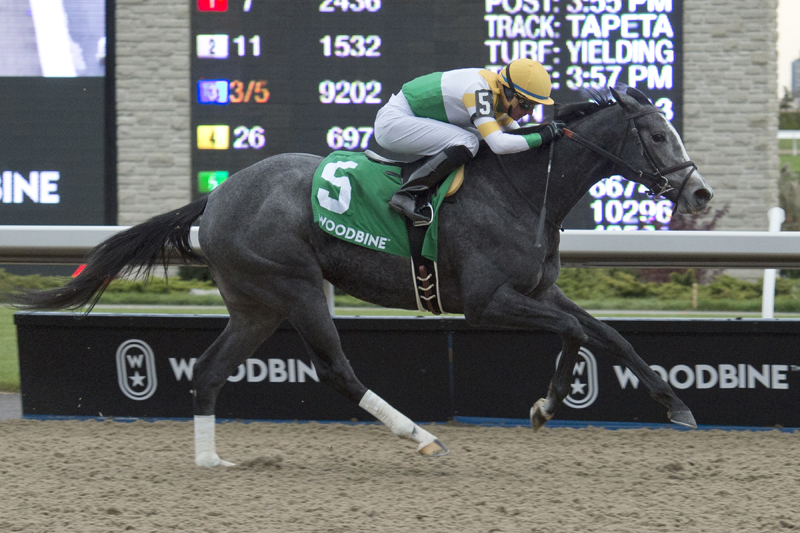 Thumbnail for Bold win for Bold Script in Princess Elizabeth Stakes at Woodbine