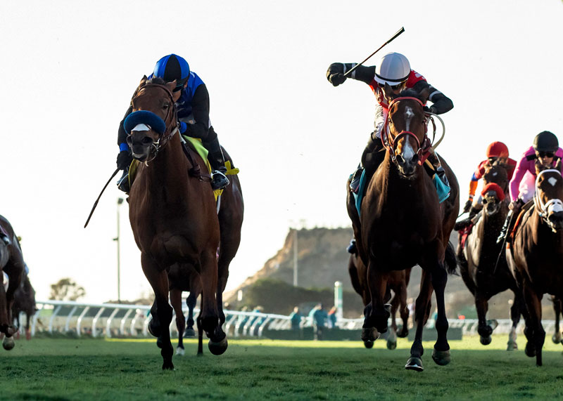 California Horse Racing Board Votes for Strictest Whip Rules in N.A.