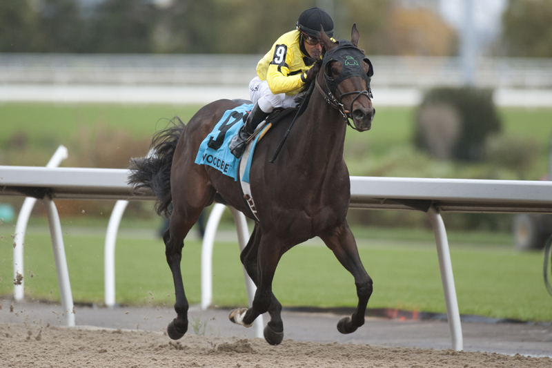 Thumbnail for Mr Havercamp wins Autumn Stakes at Woodbine in impressive style