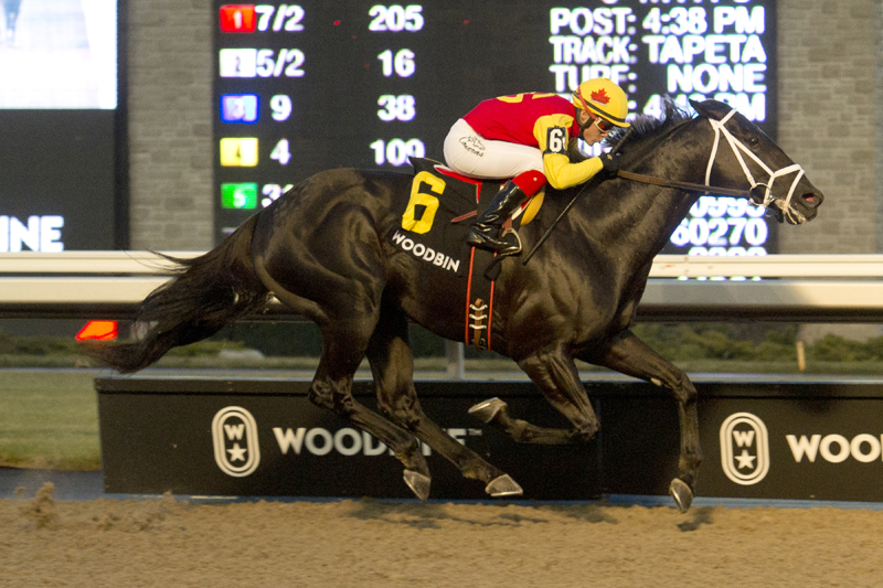 Thumbnail for Kingsport wins third Sir Barton Stakes title at Woodbine