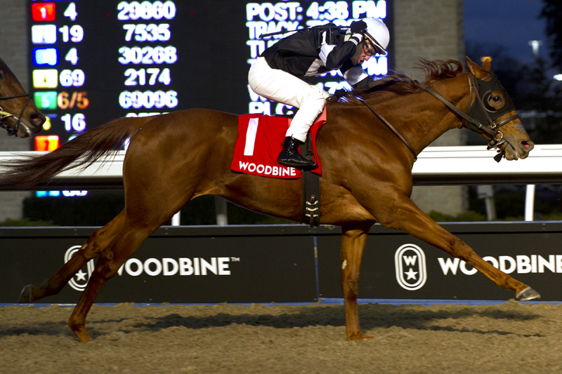 Thumbnail for Sir Winston logs first stakes win in Display Stakes at Woodbine