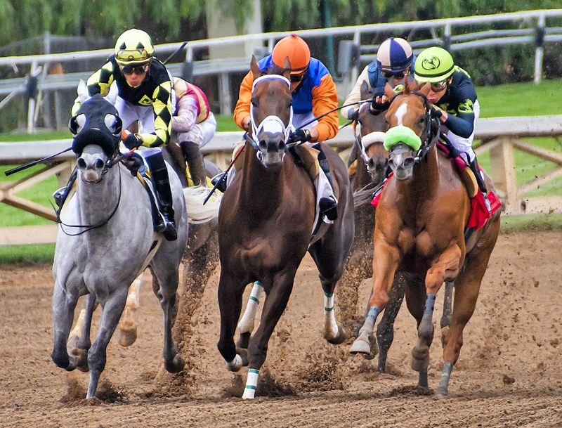 Thumbnail for Thoroughbred Industry Opinions on Phasing Out Lasix