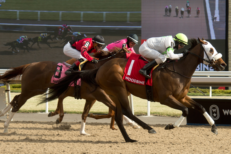 Thumbnail for Queen's Plate Contenders Contest Queenston Stakes at Woodbine
