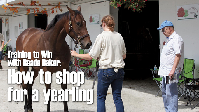 Thumbnail for How to Shop for a Thoroughbred Yearling with Reade Baker