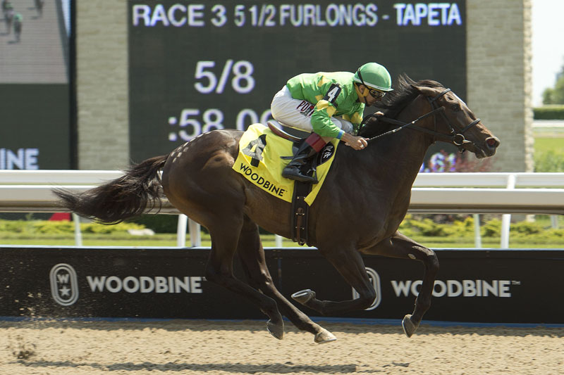 Thumbnail for Attfield well-represented in Soaring Free and Flaming Page at Woodbine