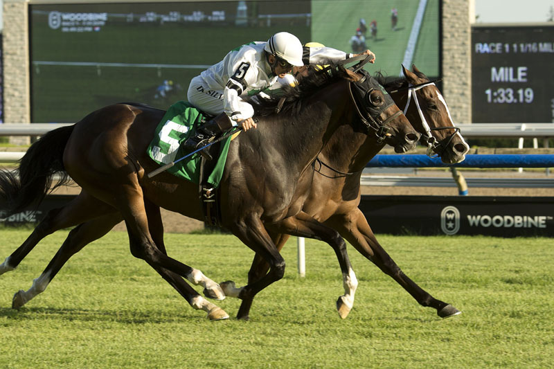 Thumbnail for Piper's Legacy takes on seven rivals in Eternal Search Stakes at Woodbine
