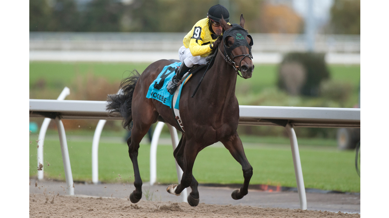 Thumbnail for Mr Havercamp is Out of Contention for the Ricoh Woodbine Mile