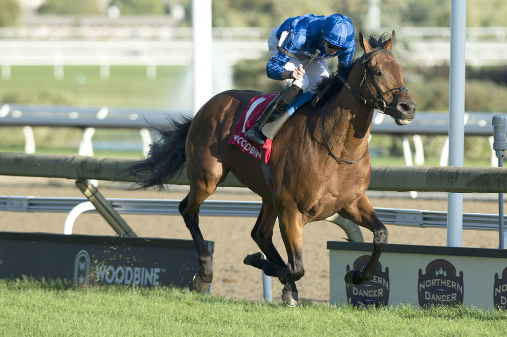 Old Persian and jockey James Doyle winning the $300,000 Northern Dancer Turf Stakes (Grade 1)on Saturday, Sept. 14 at Woodbine Racetrack. (Michael Burns Photo)