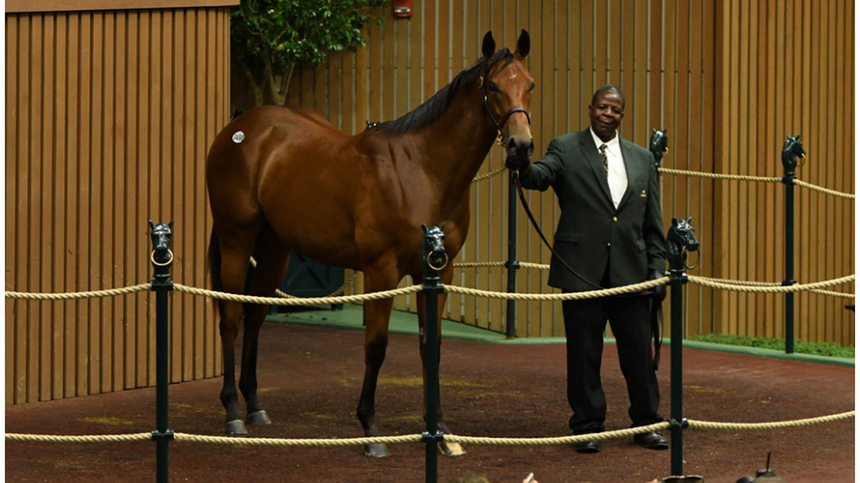 Thumbnail for $8.2 million filly by American Pharoah wows at Keeneland September