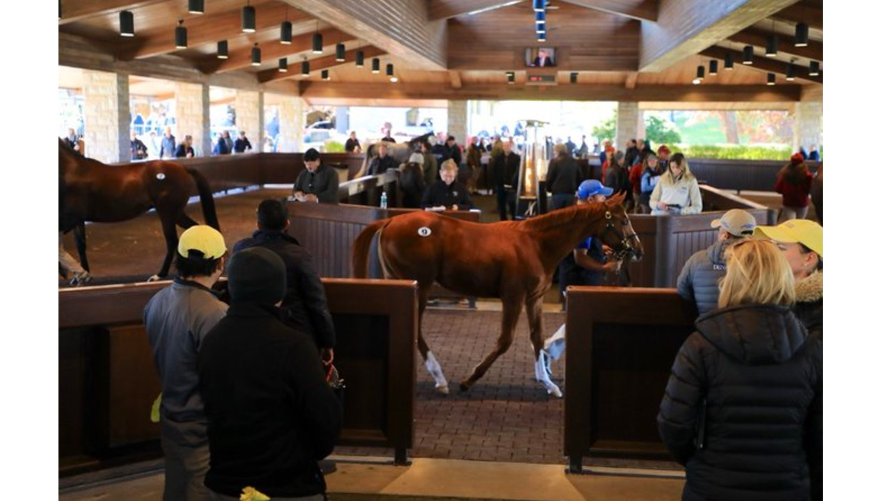 Keeneland January Sale: 1,800 entries including Canadian stakes winners