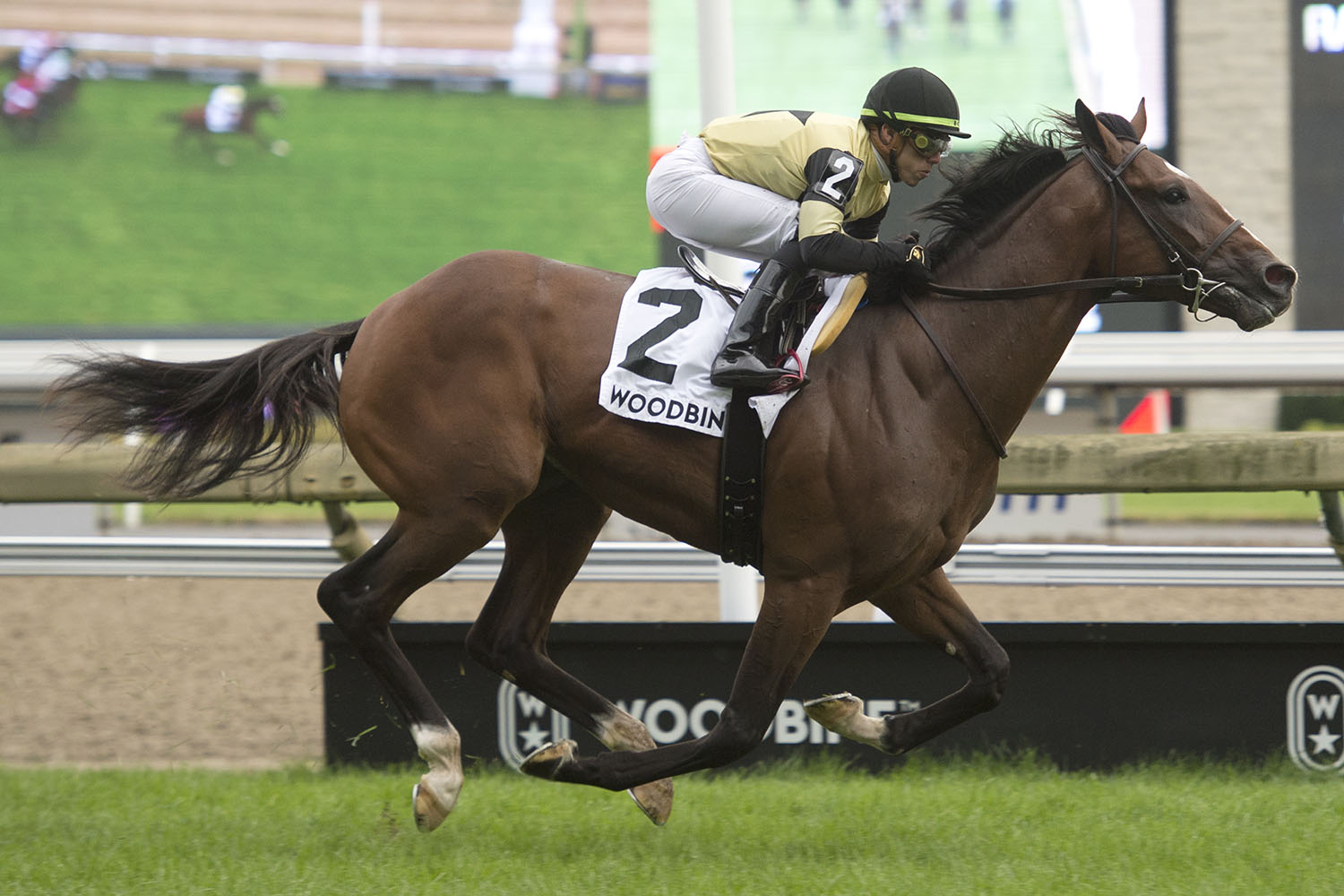 Thumbnail for Decorated Invader comes to Woodbine, takes Summer Stakes crown