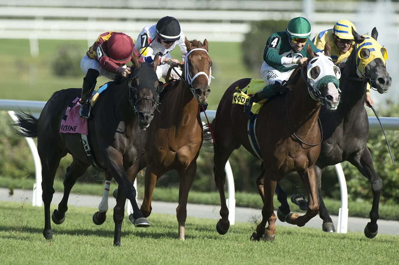 Thumbnail for Dun Drum rallies to win Vice Regent Stakes at Woodbine