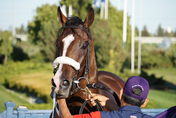 Thumbnail for Jen's Woodbine Weekend Wrap for Sept. 14-15
