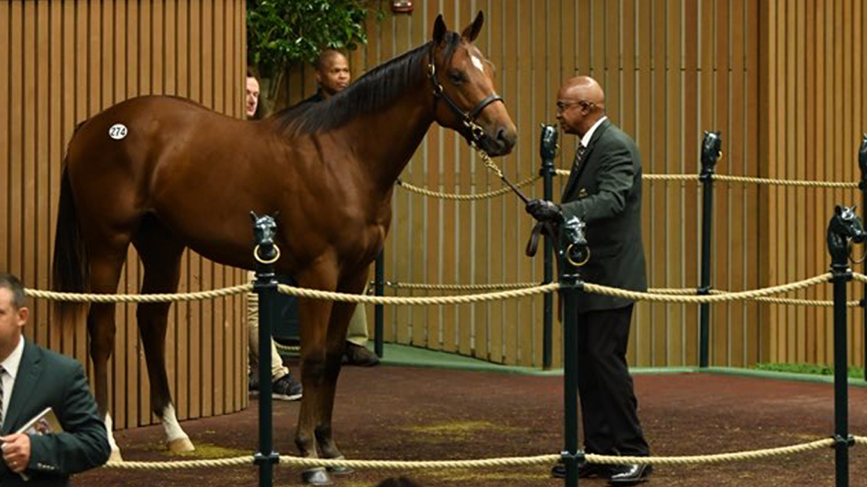 Thumbnail for $4.1 million Curlin colt tops first two Keeneland sessions