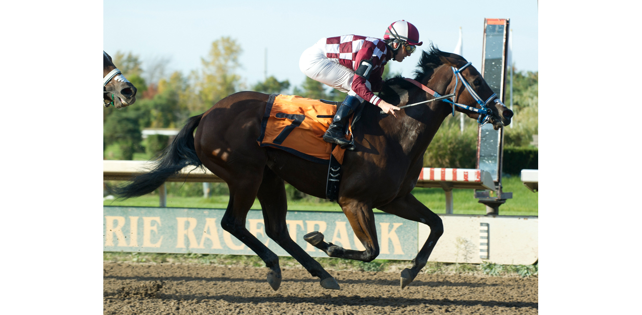 Thumbnail for Fort Erie Race Track Bids Farewell to Another Racing Season