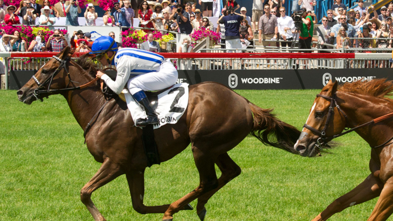 Thumbnail for Canadian Thoroughbred's Top 10 Woodbine Mile Contenders